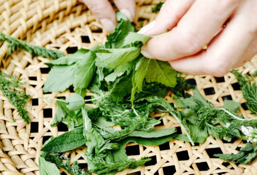 Extra ingeplande workshop! Zoek oogst en eet je eigen superfoods bij De Groene Afslag