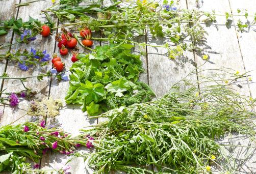 Workshop Zoek oogst en eet je eigen superfoods