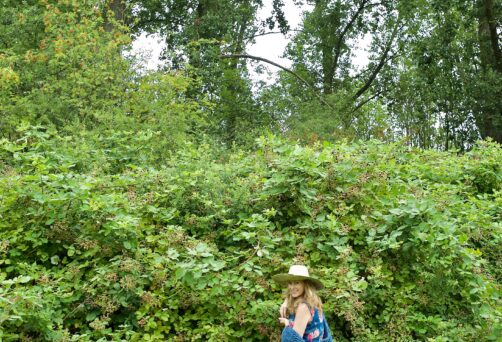 Wildplukwandeling bij Landgoed Paleis Soestdijk 9 oktober, 31 oktober