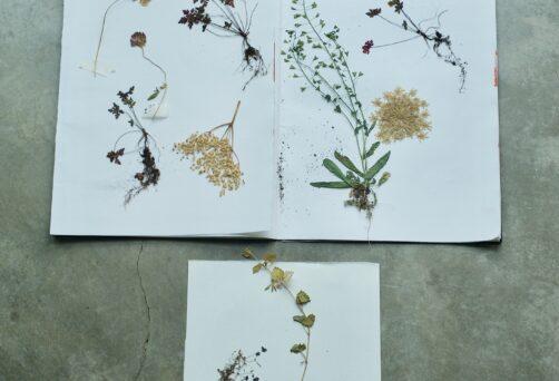 5-daagse workshop Herbarium maken – eetbare en medicinale planten herkennen en bewaren 1/9